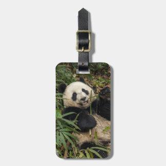 Étiquette À Bagage Panda mignon mangeant le bambou
