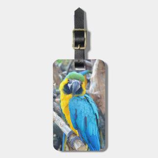Étiquette À Bagage Portrait de perroquet