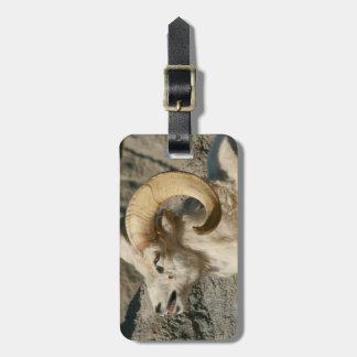 Étiquette À Bagage Rire de moutons de Big Horn
