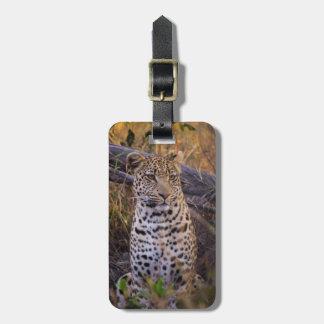 Étiquette À Bagage Séance de léopard, Botswana, Afrique