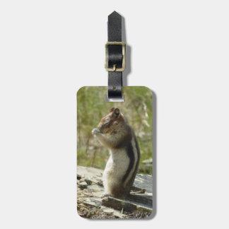 Étiquette À Bagage Tamia en photo de nature du parc national II de
