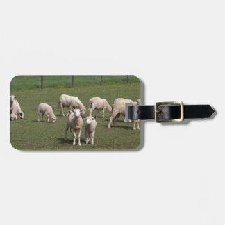 Étiquette À Bagage Troupeau de moutons