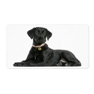 Étiquette Autocollant noir de chiot de labrador retriever