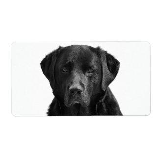 Étiquette Chiot noir de labrador retriever