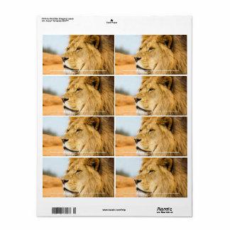 Étiquette Grand lion regardant loin