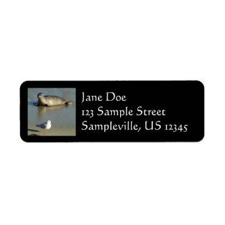Étiquette Joint de port à La Jolla la Californie