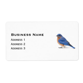 Étiquette Oiseau bleu