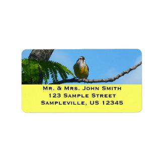 Étiquette Photographie d'oiseau de Bananaquit et de ciel