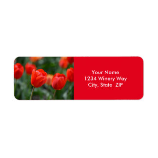 Étiquette Tulipes rouges dans le jardin