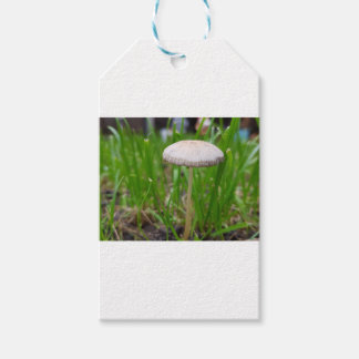 Étiquettes-cadeau champignon de bébé