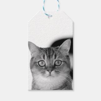 Étiquettes-cadeau Chat noir et blanc regardant directement vous