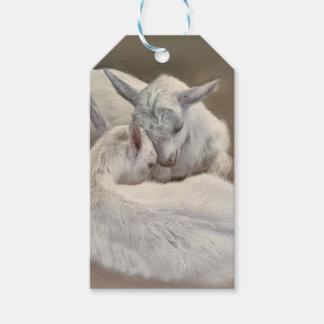 Étiquettes-cadeau chèvre de chiot dans la ferme