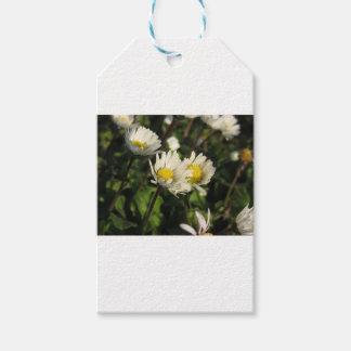 Étiquettes-cadeau Fleurs de marguerite blanche sur l'arrière - plan