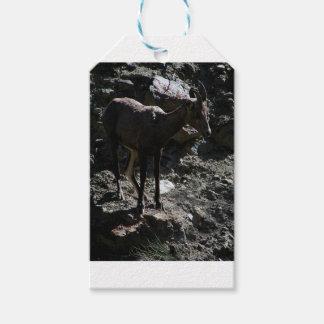 Étiquettes-cadeau Mouflons d'Amérique de montagne rocheuse, brebis