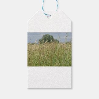 Étiquettes-cadeau Paysage d'été de champ sauvage. La Toscane, Italie