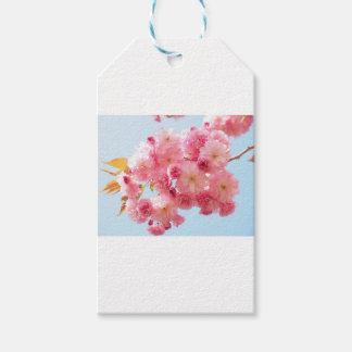 Étiquettes-cadeau Photographie japonaise rose de fleurs de cerisier