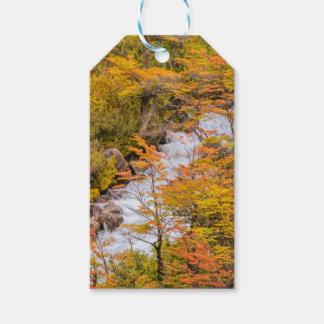 Étiquettes-cadeau Scène colorée de paysage de forêt, Patagonia