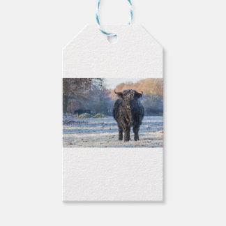 Étiquettes-cadeau Vache écossaise noire à montagnard dans le paysage