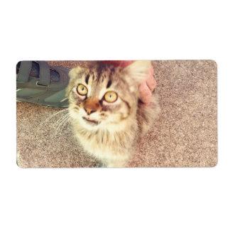 Étiquettes d'expédition avec l'image du chaton