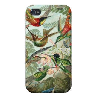 Étui iPhone 4/4S Cru Haeckel d'illustration de colibris