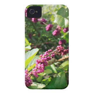 Étui iPhone 4 Beautyberry sauvage Bush dehors dans le jour