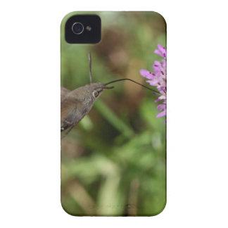 Étui iPhone 4 Faucon-mite de colibri (stellatarum de