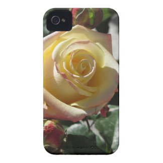 Étui iPhone 4 Fleur simple de rose jaune au printemps