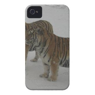 Étui iPhone 4 Locations deux tigres sibériens