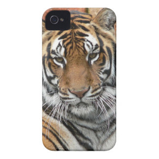 Étui iPhone 4 Locations Tigres dans la contemplation