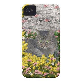 Étui iPhone 4 Mimosa le chat de tigre en fleurs de mimosa