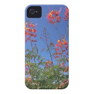 Étui iPhone 4 Oiseau du paradis mexicain