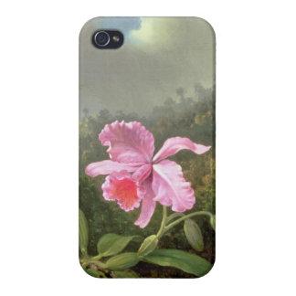 Étui iPhone 4 Orchidée et colibris de Martin Johnson Heade