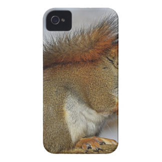 Étui iPhone 4 Petit écureuil se tenant sur le bois de Brown