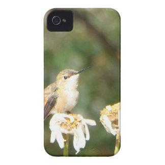 Étui iPhone 4 Photographie de colibri se reposant sur la