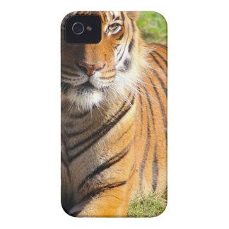 Étui iPhone 4 Tigre malais de locations