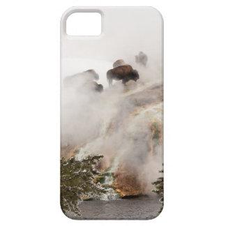 Étui iPhone 5 Bison entouré par la vapeur dans Yellowstone