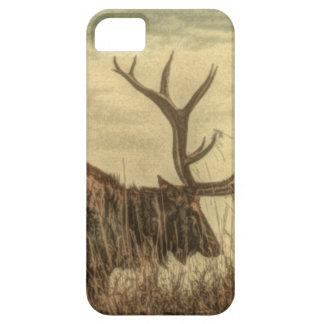 Étui iPhone 5 élans rustiques de Taureau de faune de région