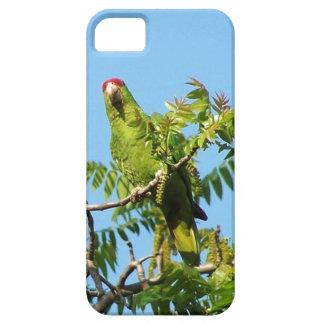 Étui iPhone 5 Faune sauvage d'animaux d'oiseaux de perroquet
