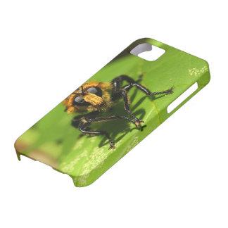 Étui iPhone 5 Mouche de voleur