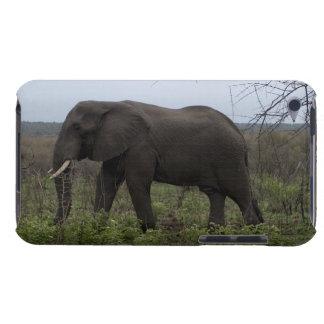 Étui iPod Touch Éléphant africain, faune, animal sauvage