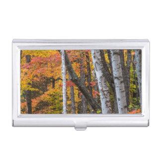 Étui Pour Cartes De Visite Couleur d'automne dans la forêt près du port de