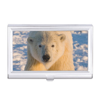 Étui Pour Cartes De Visite l'ours blanc, maritimus d'Ursus, polaire