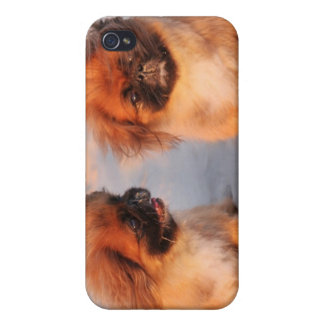 Étuis iPhone 4 Chiens mignons de Pekingese