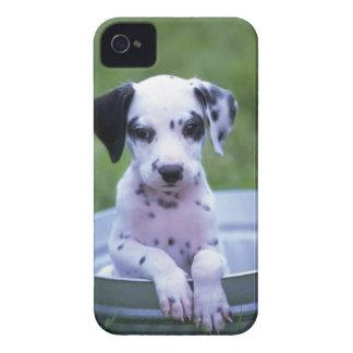 Étuis iPhone 4 Chiot dalmatien adorable attendant Bath