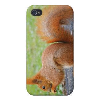 Étuis iPhone 4 Écureuil rouge mignon