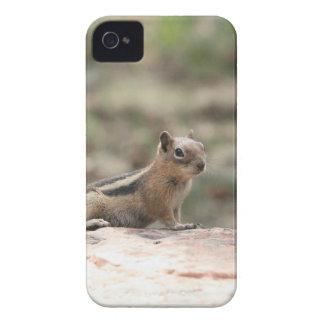 Étuis iPhone 4 Exposer au soleil l'écureuil moulu