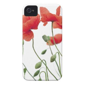 Étuis iPhone 4 pavot-fleur