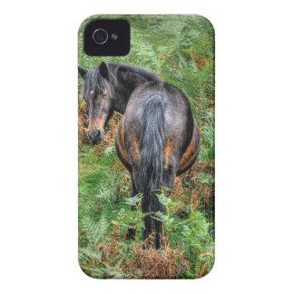 Étuis iPhone 4 Poney de forêt de baie sauvage nouveaux et fougère