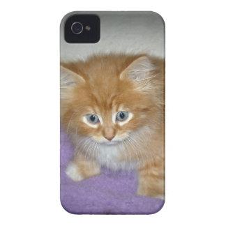 Étuis iPhone 4 Tache sur ce chaton