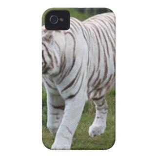Étuis iPhone 4 Tigre blanc